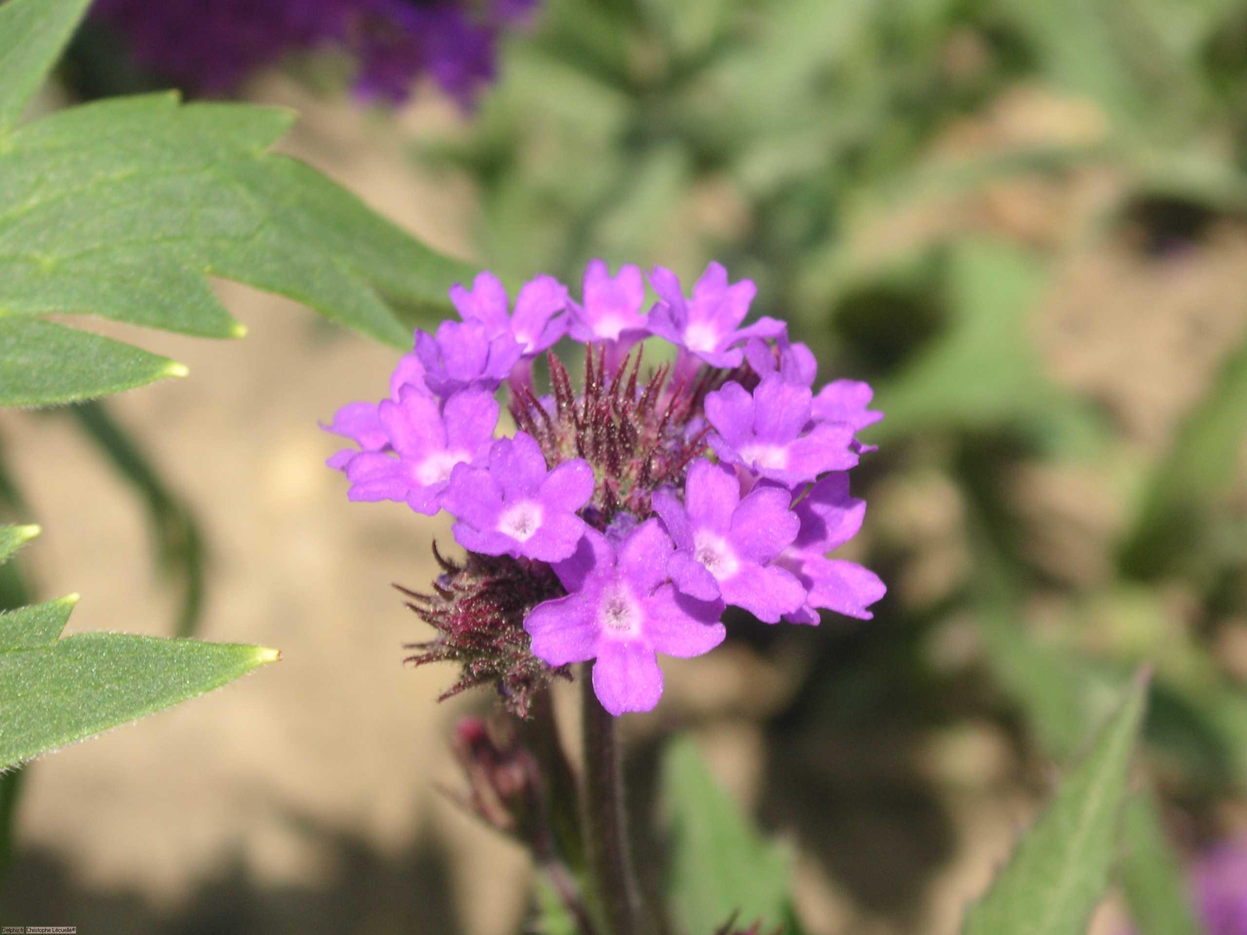 Fleurs de versailles le site des programmes for Site de fleurs