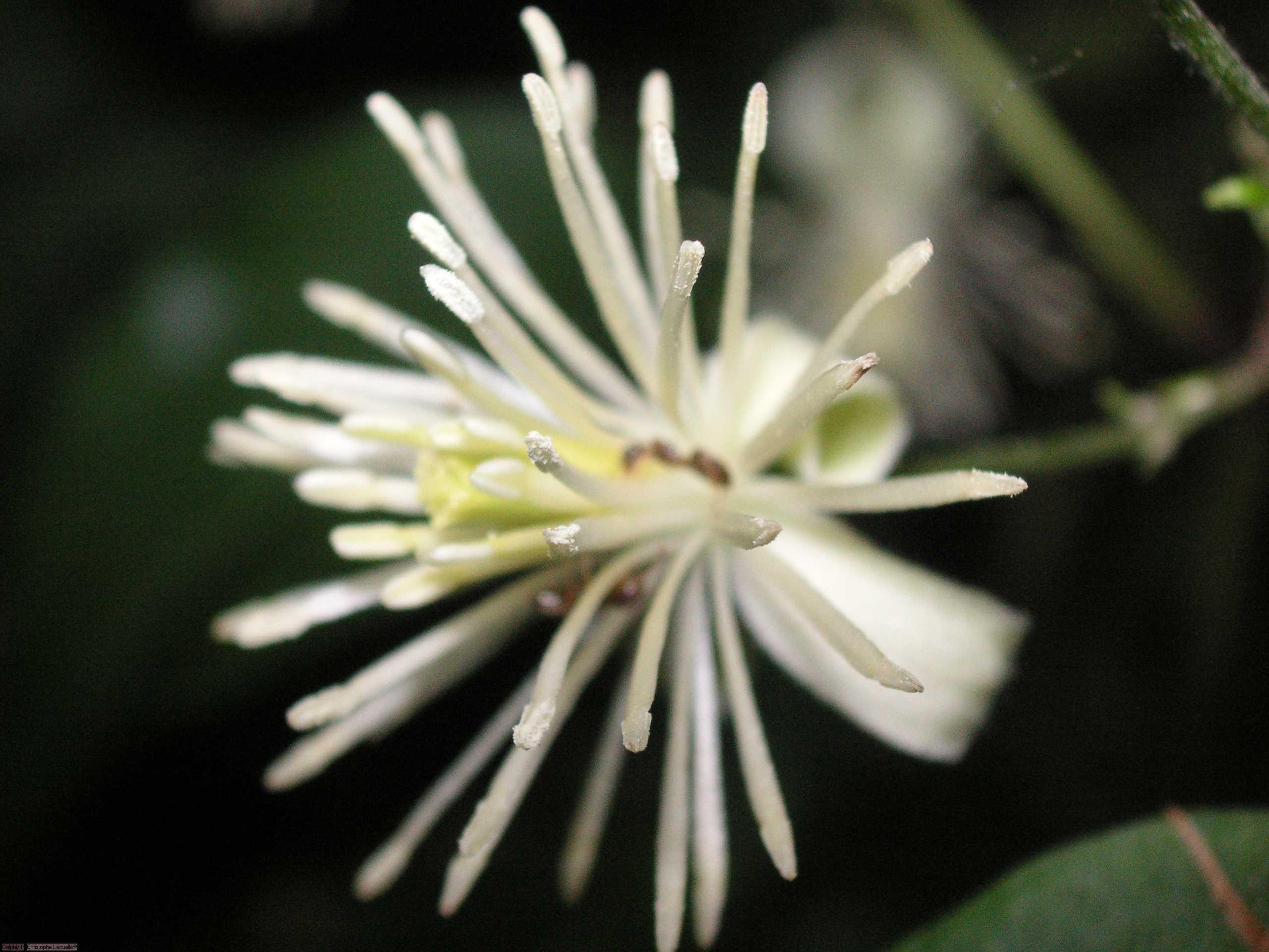 Fleurs des pyr n es le site des programmes for Site de fleurs