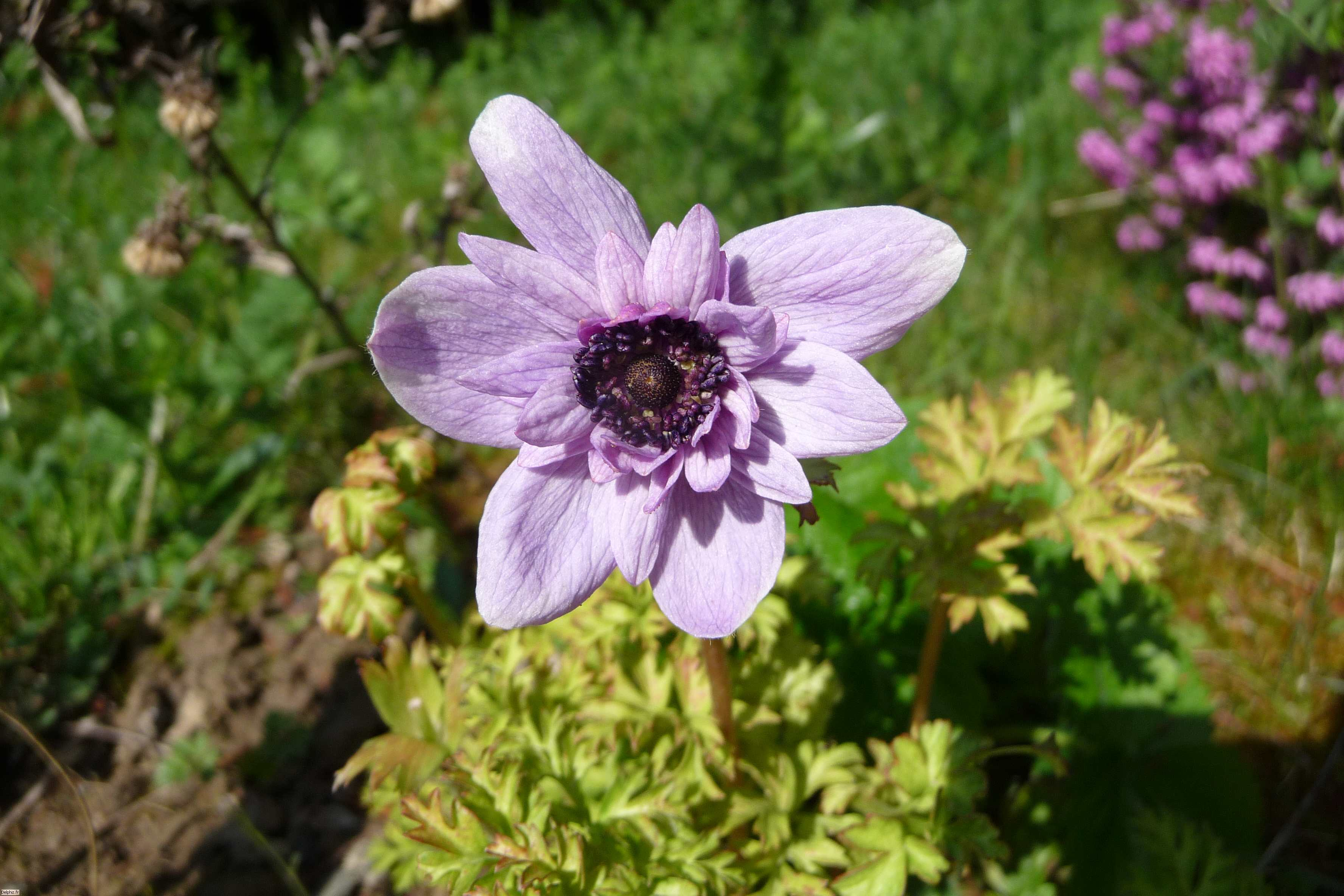 Fleur violette le site des programmes for Site de fleurs